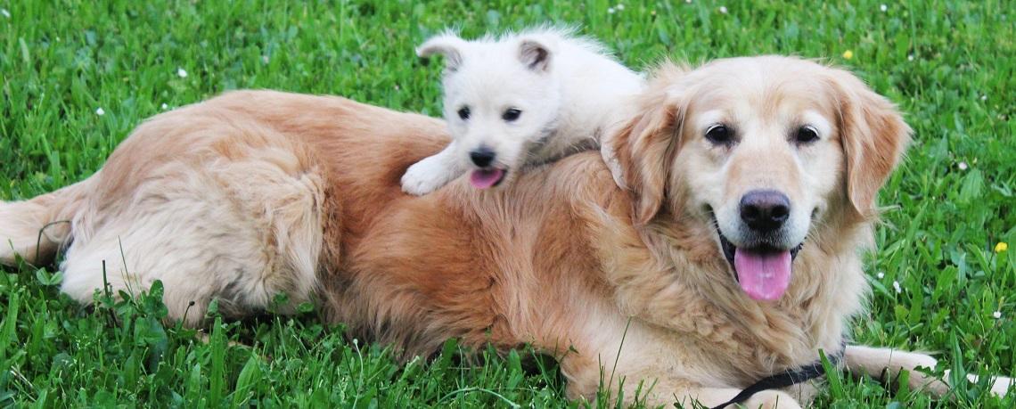 7 Ways to Remove Dog Odors